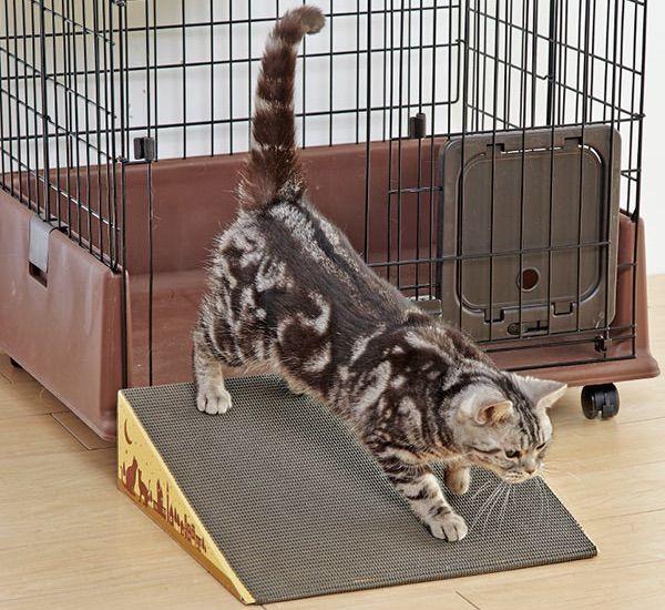 老猫に優しいトイレの段差を無くすスロープ
