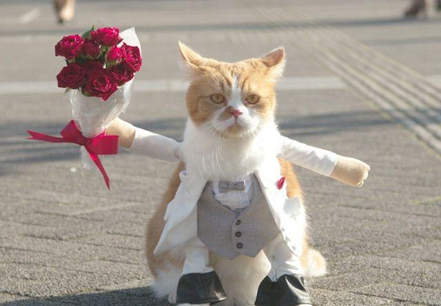 猫がプロポーズするテレビCM