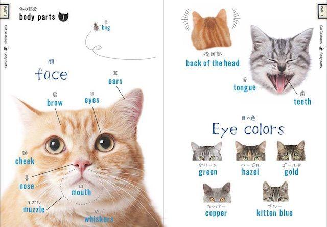 猫の英単語や慣用句を収録した本「ねこたん」