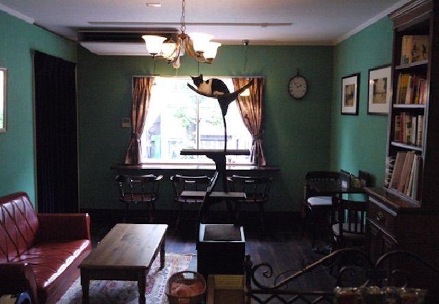 白山の猫カフェ 黒猫喫茶