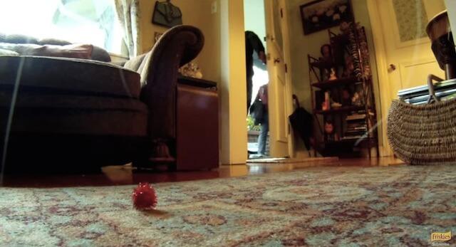 お見送り フリスキーによる猫目線のカメラ動画