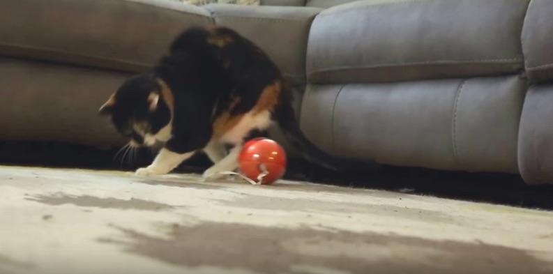 PlayDate(プレイデータ)で遊ぶ猫