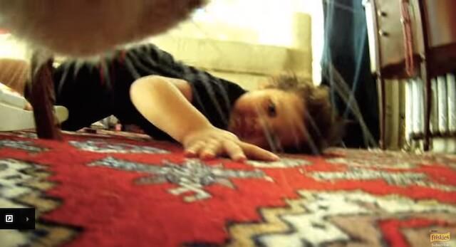 子供の出現 フリスキーによる猫目線のカメラ動画
