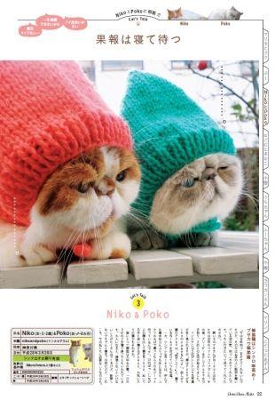 タレント猫 Niko&Poko