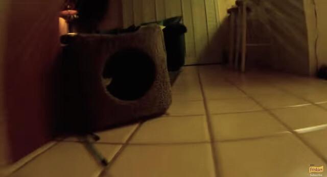 就寝 フリスキーによる猫目線のカメラ動画