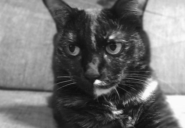 キリッとした錆猫の写真 - 猫の写真素材