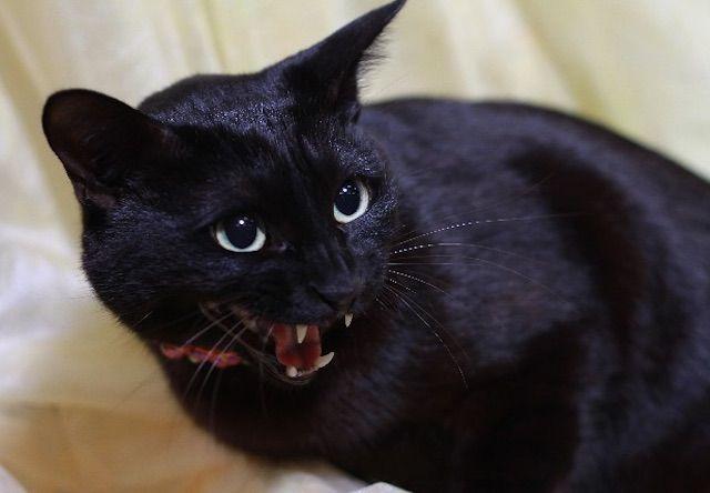 猫の鳴き声に共通点はあるのか?音声学者が猫語の研究を開始