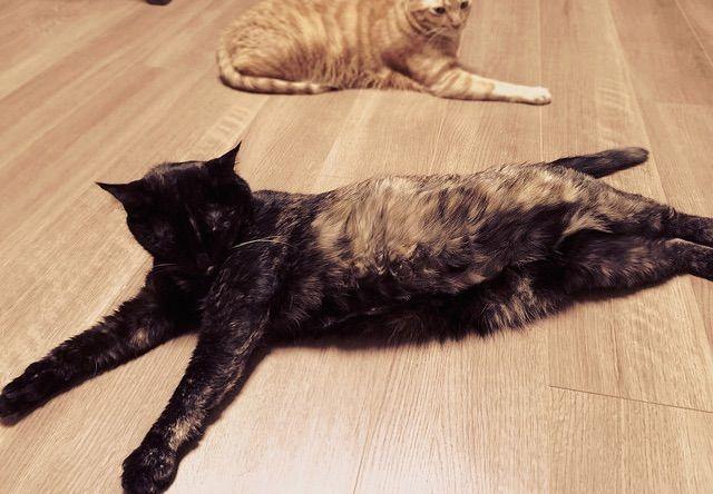 手足を伸ばして寝転ぶ猫 - 猫の写真素材