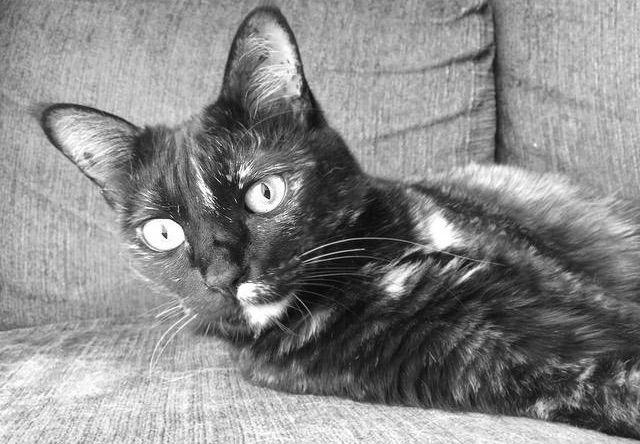 黒目が細くなった猫 - 猫の写真素材