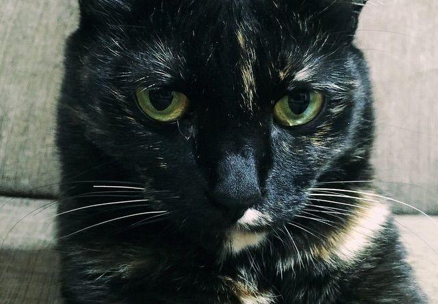 ムスッとした顔の錆猫 - 猫の写真素材