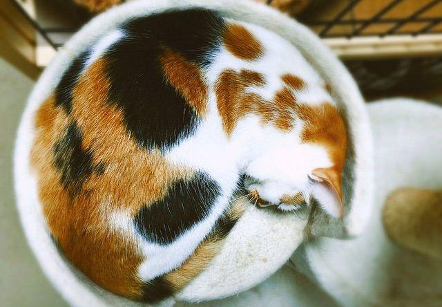 丸く収まって眠る猫 - 猫の写真素材