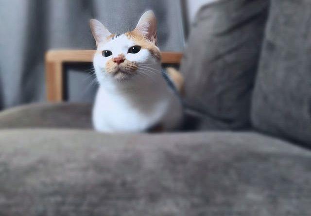 三毛猫のくつろぎタイム – 猫の写真素材
