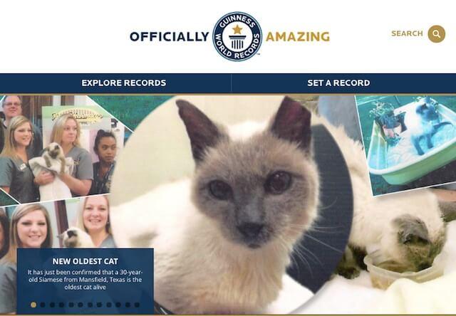 30歳の長寿猫がギネス記録