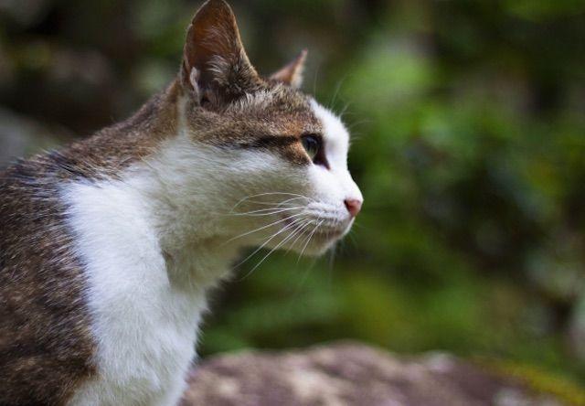 高知県と高知市が猫の不妊手術費用の助成を受付中