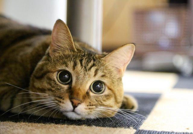オランダとトルコの可愛い人気猫2匹