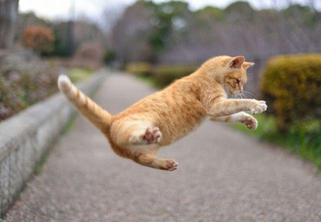 猫のスローモーション動画10選