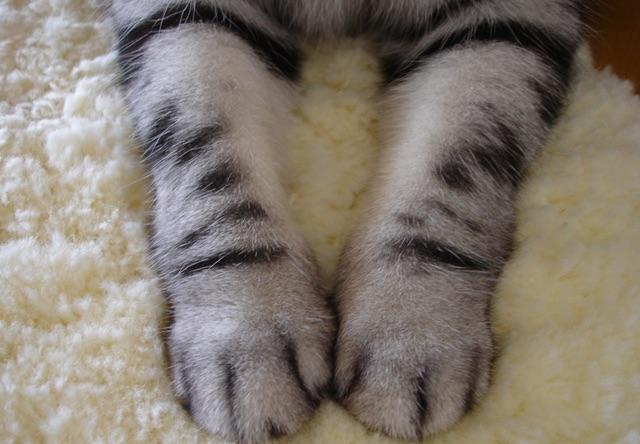 猫の手イメージ