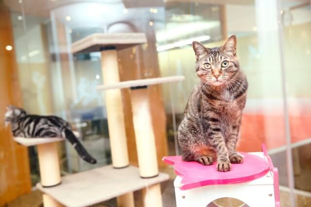 マース ジャパン リミテッドで暮らす猫