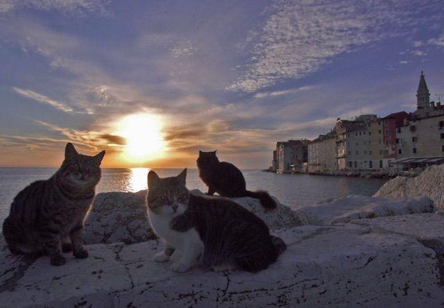 世界ネコ歩き クロアチア