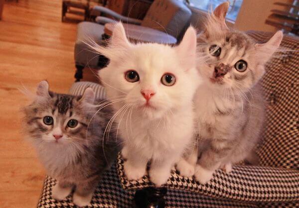 約20匹の猫ちゃんが在籍(モカラウンジ池袋東口)