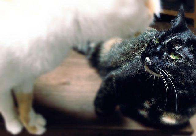 喧嘩に発展しそうな猫たち - 猫の写真素材