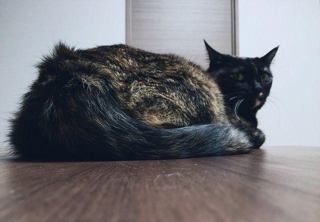 座ったまま振り返るサビ猫 - 猫の写真素材