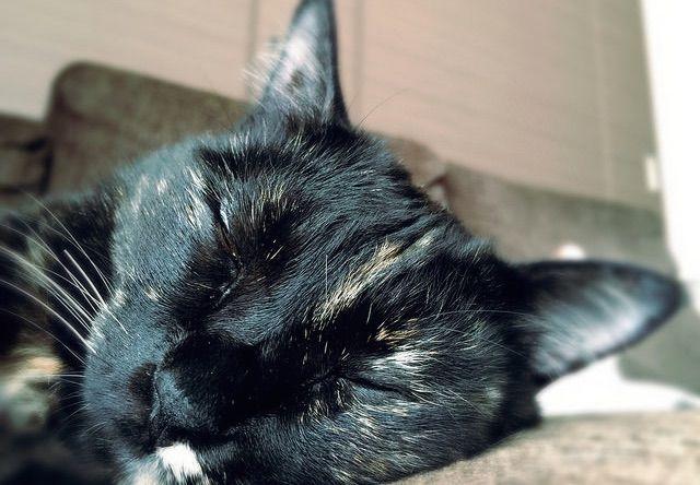 すやすや眠るサビ猫の寝顔 - 猫の写真素材