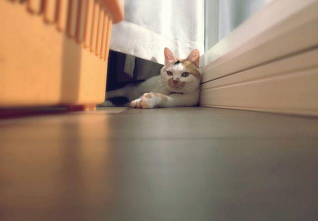 窓際で偉そうにすわる三毛猫 - 猫の写真素材