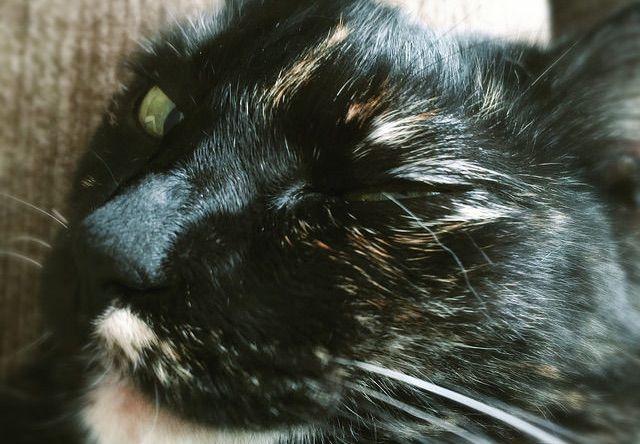 ウィンクする猫 - 猫の写真素材