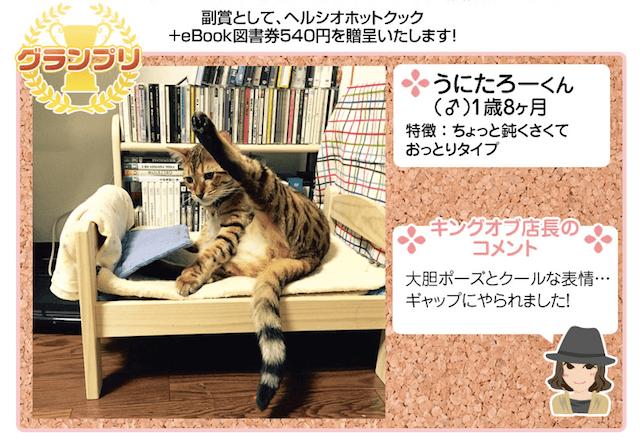 にゃんだふるセクシーグラビにゃのグランプリ猫