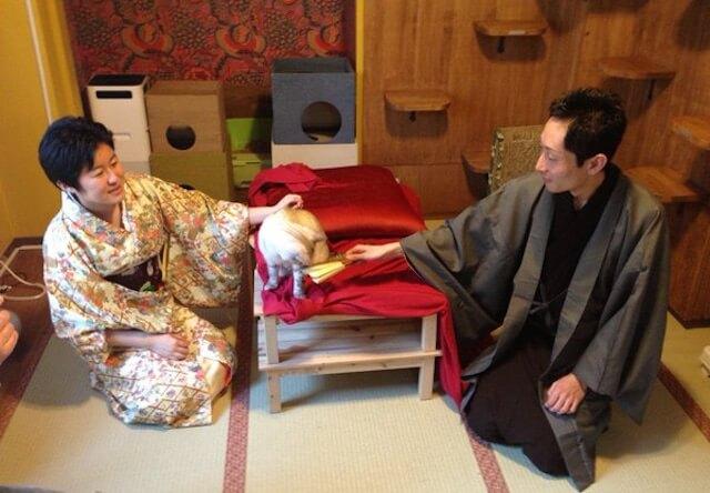 猫カフェで落語会「東京ねこりぱ寄席」