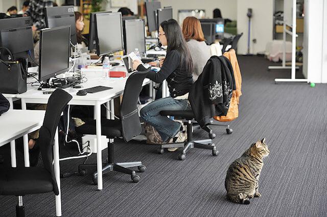 オフィスに佇む猫