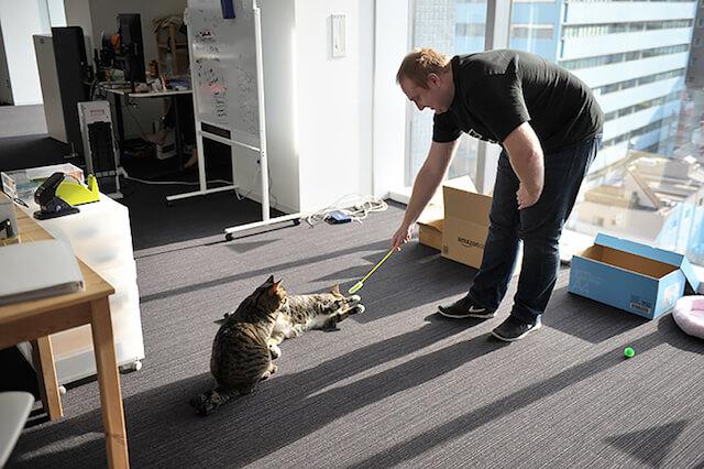 オフィスにいる2匹の猫