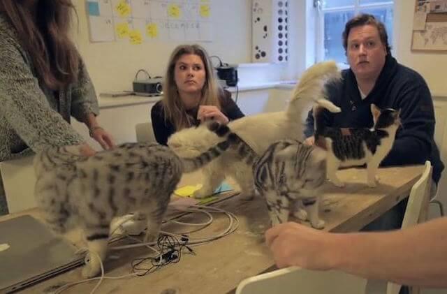 会議に参加する猫