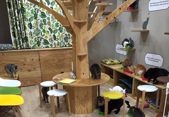 ネコビル3F キャットカフェ