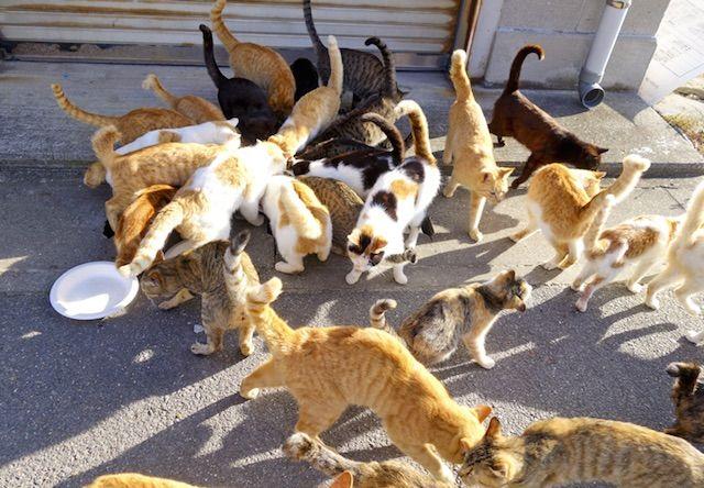 男木島の猫たち