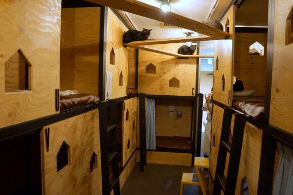ネコビル4F キャット&ベッド&ブックフロア