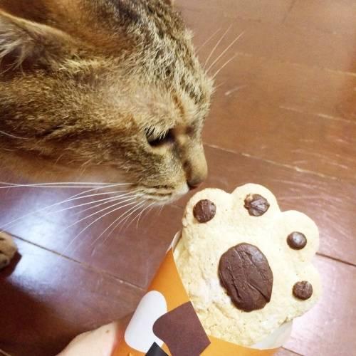 ねこのてを猫に近づけてみる