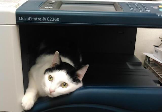 コピー機から出力される猫