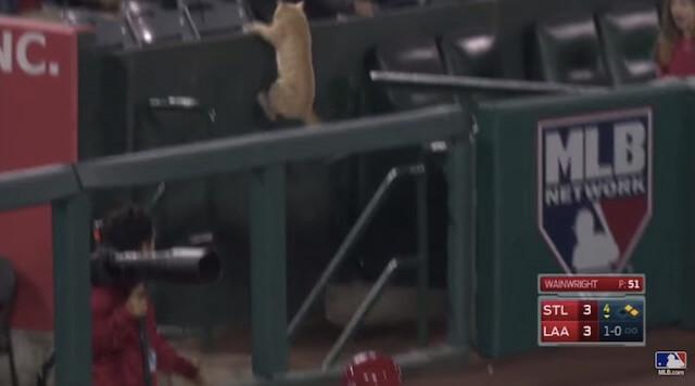観客席に逃げ込む猫