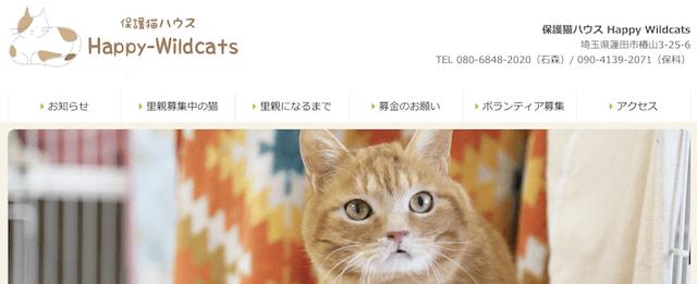 保護猫ハウス Happy Wildcats