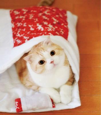 おやすみニャン 猫用和布団