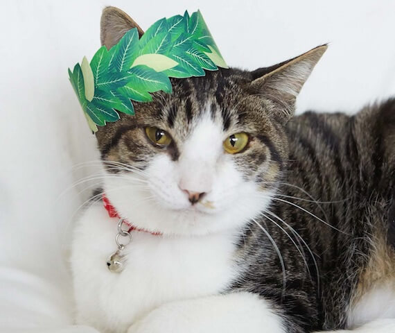 月桂冠を被る猫