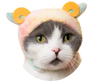 猫のかぶりもの、親ひつじ(まったりミックス)