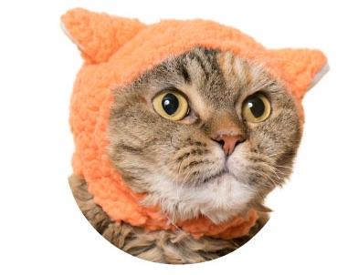 猫のかぶりもの、親ひつじ(ほんわかオレンジ)