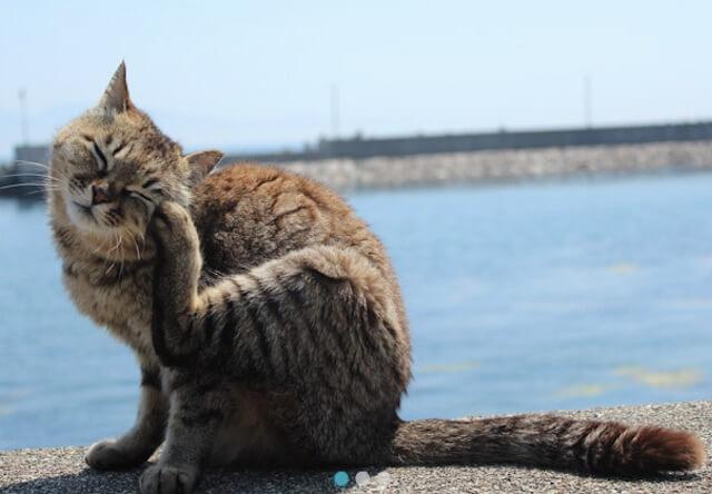 「旅猫ロマン」坂の街 尾道の前後編