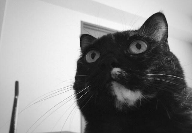 下から見たビックリ顔 - 猫の写真素材