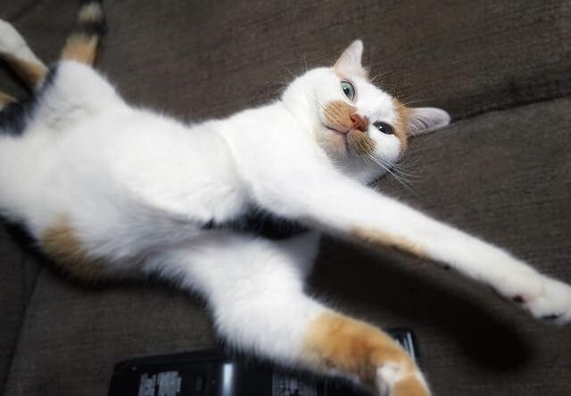 見上げて見下す猫 - 猫の写真素材