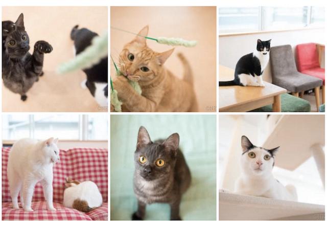 川崎の猫カフェ「猫式」で、上村雄高さんによる猫の写真教室が開催