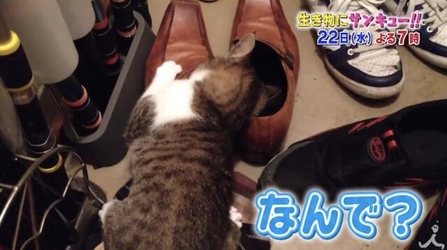ネコって不思議
